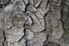 Zgłębia pęknięcia na barkentynie koński kasztan Zdjęcie Stock