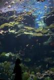 Zgłębia pod morzem Obraz Royalty Free