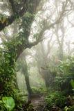 Zgłębia w luksusowym mgłowym tropikalnym lesie deszczowym Obraz Royalty Free
