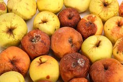 zgniłe jabłka Fotografia Stock
