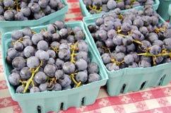 Zgod winogrona Zdjęcia Royalty Free