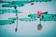 Zgodliwy pojęcie Piękny lotosowy kwiat prawi komplementy fotografia stock