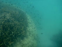 ZGreat Barrier Reef. Great Barrier Reef in Australia Stock Photos