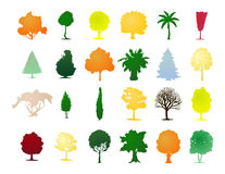 zgromadzenie drzewa Obrazy Royalty Free
