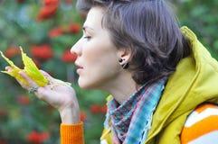 Zgromadzenie koloru żółtego liście Obraz Stock