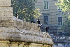 Zgromadzenie kormorany obrazy stock
