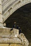 Zgromadzenie kormorany zdjęcie royalty free