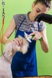 Zgrzywiony włosiany muśnięcie na psiej ` s twarzy Fotografia Royalty Free