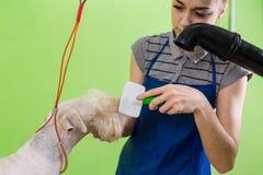 Zgrzywiony włosiany muśnięcie na psiej ` s twarzy Obrazy Royalty Free