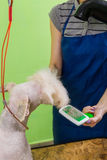 Zgrzywiony włosiany muśnięcie na psiej ` s twarzy Obraz Royalty Free