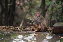 Zhangjiajie национальный Forest Park, Китай Стоковое фото RF