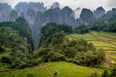 Zhangjiajie-Berge stockfotos