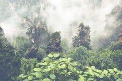 Zhangjiajie Forest Park. Gigantic pillar mountains rising from t. He canyon. Hunan province, China Royalty Free Stock Image