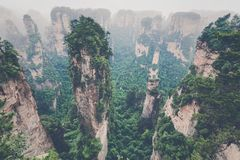 Zhangjiajie Forest Park. Gigantic pillar mountains rising from t. He canyon. Hunan province, China Royalty Free Stock Images
