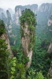Zhangjiajie Forest Park Montagnes gigantesques de pilier se levant de t image libre de droits