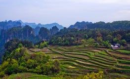 Zhangjiajie Forest Park national dans la province de Hunan, Chine photos libres de droits