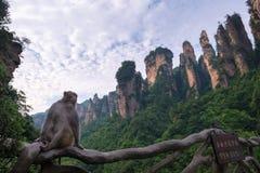 Zhangjiajie Forest Park nazionale, Cina Fotografie Stock Libere da Diritti