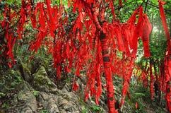 Zhangjiajie Kina - Maj 10, 2017: Detalj av röda band i önskaen Forest Zhangjiajie National Park, Kina Royaltyfri Bild