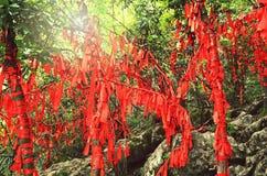 Zhangjiajie Kina - Maj 10, 2017: Detalj av röda band i önskaen Forest Zhangjiajie National Park, Kina Arkivbild