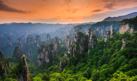 Zhangjiajie medborgare Forest Park på solnedgången, Wulingyuan, Hunan, royaltyfria foton