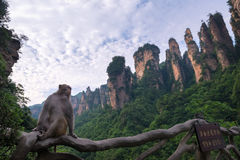 Zhangjiajie National Forest Park, China. Monkey sitting on the fence with mountains on the background, the Zhangjiajie National Forest Park, China royalty free stock photos