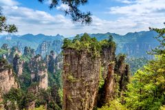Zhangjiajie National Forest Park. Gigantic quartz pillar mountains rising from the canyon during summer sunny day. Hunan, China.  stock photography