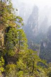 Zhangjiajie National Park. China. Avatar mountains royalty free stock photography