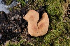 Zhavoronki, Russian rye cookies for spring equinox selebration i. N nature horizontal royalty free stock photo