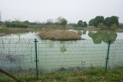 Zhejiang huzhou che changxing il villaggio dell'alligatore di Yangtze Immagine Stock