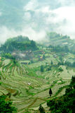Zhejiang Lishui terraces in the morning Stock Image