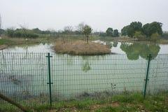 Zhejianghuzhou die het krokodilledorp van Yangtze changxing stock afbeelding