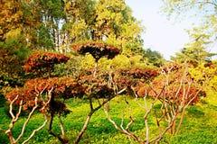 Zhengzhou people' parque de s Imagen de archivo libre de regalías