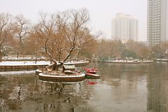 Zhengzhou people& x27; s park Obrazy Royalty Free