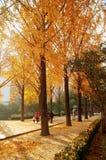 Zhengzhou people& x27; s park zdjęcie royalty free