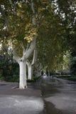 Zhengzhou people& x27; s park obraz royalty free