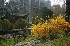 The garden is full of the vigour of springtime. Zhengzhou people's Park Stock Photos