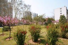 The garden is full of the vigour of springtime. Zhengzhou people's Park Royalty Free Stock Photo