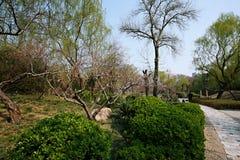 The garden is full of the vigour of springtime. Zhengzhou people& x27;s Park Stock Photos