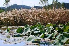 Zhengzhou Yellow River det sceniska området Royaltyfria Bilder