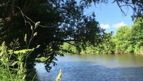 Zhizdra flod i skogen i den Optina eremitboningen Flodoväsen i en solig dag för sommar stock video