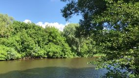 Zhizdra River in the forest in the Optina Hermitage. River noise in a summer sunny day stock video footage