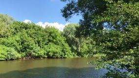 Zhizdra rzeka w lesie w Optina eremu Rzeczny hałas w lato słonecznym dniu zdjęcie wideo