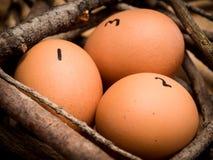 Zählen Sie Ihre Hühner Stockfotografie