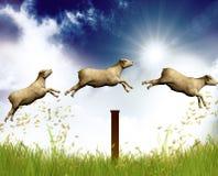 Zählung der springenden Schafe Stockfotos
