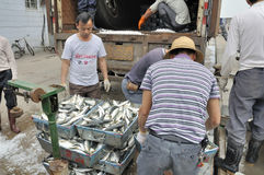 Zhuhai,china: fish pier Stock Photos