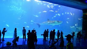 Tourists in front of the world`s largest aquarium. Zhuhai, China: September 23, 2018: Tourists in front of the world`s largest aquarium at Chimelong Ocean stock video footage