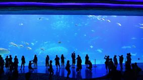Tourists in front of the world`s largest aquarium. Zhuhai, China: September 23, 2018: Tourists in front of the world`s largest aquarium at Chimelong Ocean stock footage