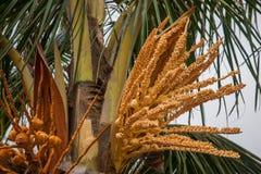 Zhuhai City Road seaside coconut flower lovers Stock Image