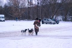 Zhytomyr Ukraina, MARZEC, - 05, 2014: stara kobieta uliczni żywieniowi przybłąkani psy Fotografia Royalty Free