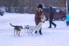 Zhytomyr Ukraina, MARZEC, - 05, 2014: stara kobieta uliczni żywieniowi przybłąkani psy Zdjęcia Royalty Free